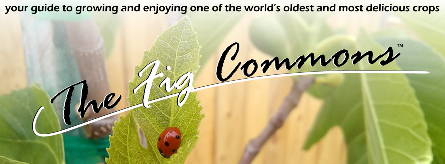 The Fig Commons